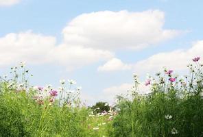 flores y cielo azul