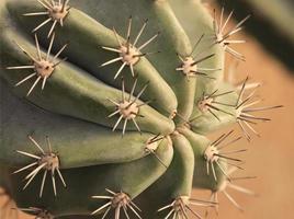 Close-up of a cactus