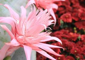 Tropical pink flower photo