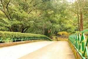 Pedestrian bridge surrounded by trees