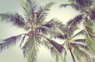 palmeras con edición vintage foto