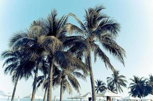 altas palmeras en un resort foto
