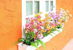 Window box flowers photo
