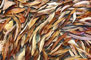 fondo de hojas secas marrones