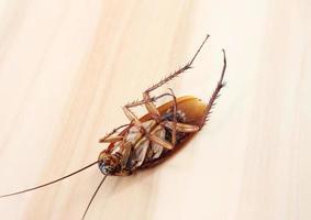 cucaracha muerta en la espalda