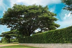 Tree and hedge photo