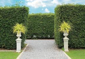Ornamental shrubs in park photo