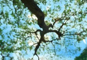 Blurry tree background