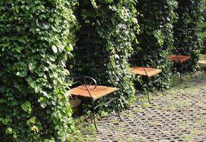 sillas de madera en el parque