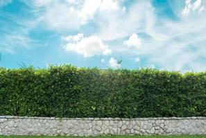 Brick wall and green hedge photo
