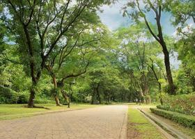 Stone pathway park