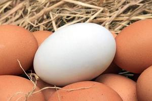 White and brown eggs photo