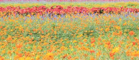 flores de colores en un campo foto