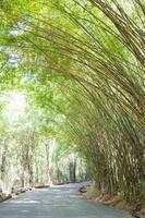 bambúes sobre la carretera foto