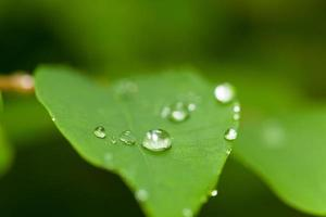Droplets of water on a leaf photo