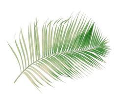 rama de coco descolorida