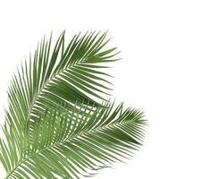dos ramas de coco