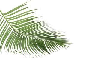 Lush palm leaves
