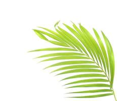 Green palm leaf with copy space on white