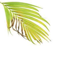 follaje tropical con área marrón