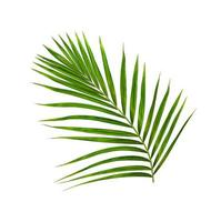 Lush tropical green foliage isolated on white