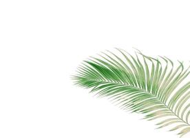 Faded tropical branch with copy space