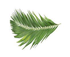 Lush green tropical branch photo