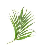 follaje verde tropical sobre fondo blanco