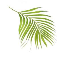 Curved bright green leaf