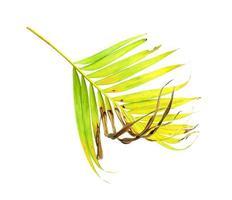 hoja de palma verde con área marrón
