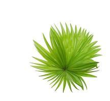 exuberante follaje tropical verde sobre blanco