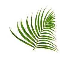 exuberante follaje verde tropical aislado
