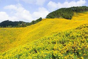 Landscape in Thailand with yellow flowers