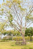bancos de madera debajo del árbol.