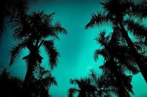 palmeras bajo el cielo azul