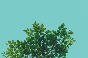 hojas verdes sobre fondo azul foto