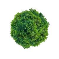Green tree circle photo