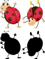 Ladybug in two positions with its silhouette on white background vector