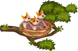Hungry chicks on the nest vector