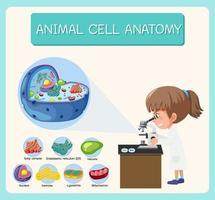 anatomía del diagrama de biología de células animales
