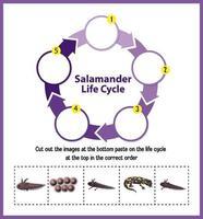 diagrama del ciclo de vida de la salamandra vector