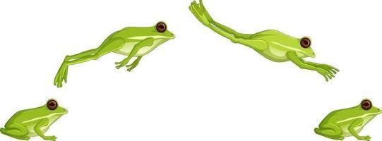 Secuencia de salto de rana arborícola verde aislado sobre fondo blanco. vector