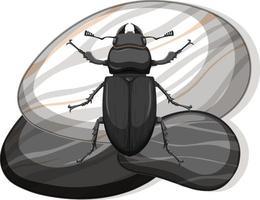 Vista superior del escarabajo pelotero metálico sobre una piedra sobre fondo blanco. vector