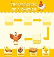 diagrama que muestra el ciclo de vida del pollo