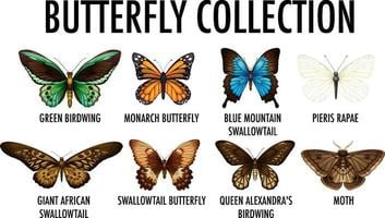 Set of different butterfly collection vector