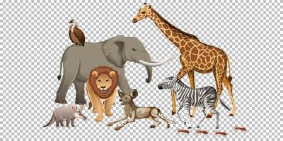 Group of wild african animal on transparent background vector