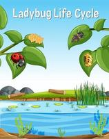 Ladybug Life Cycle font in swamp scene vector