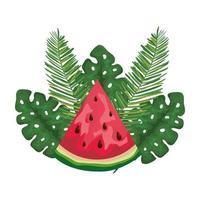 fruta tropical de sandía fresca con hojas de palmeras