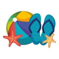 globo de playa con chanclas y estrella de mar vector