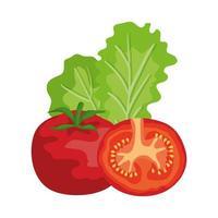 tomates frescos y lechuga verduras saludables vector